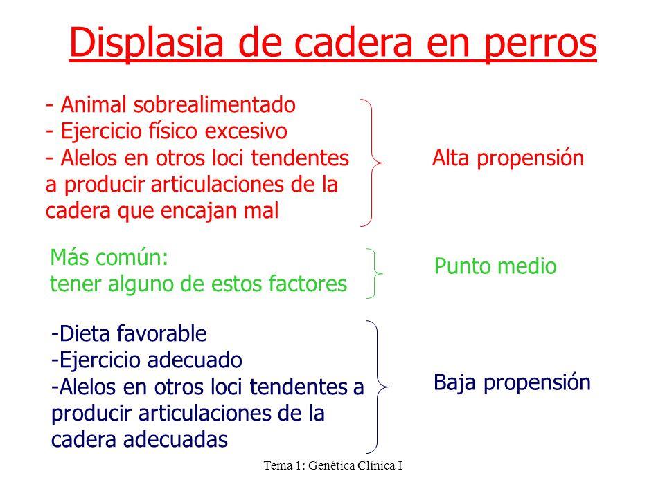 Tema 1: Genética Clínica I Displasia de cadera en perros - Animal sobrealimentado - Ejercicio físico excesivo - Alelos en otros loci tendentes a produ