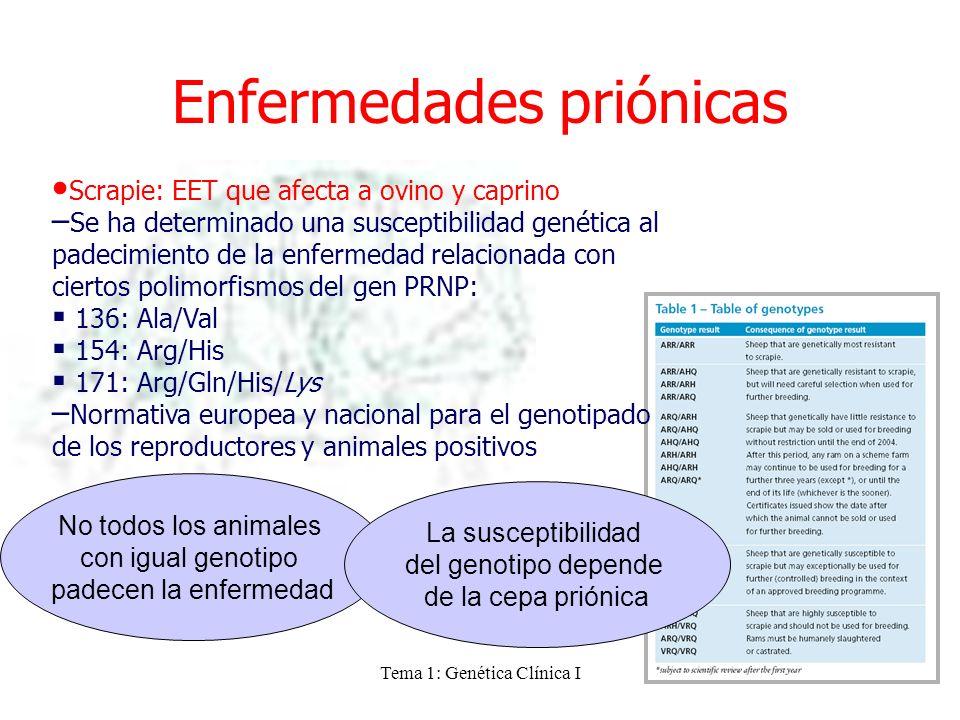 Tema 1: Genética Clínica I Enfermedades priónicas Scrapie: EET que afecta a ovino y caprino –Se ha determinado una susceptibilidad genética al padecim