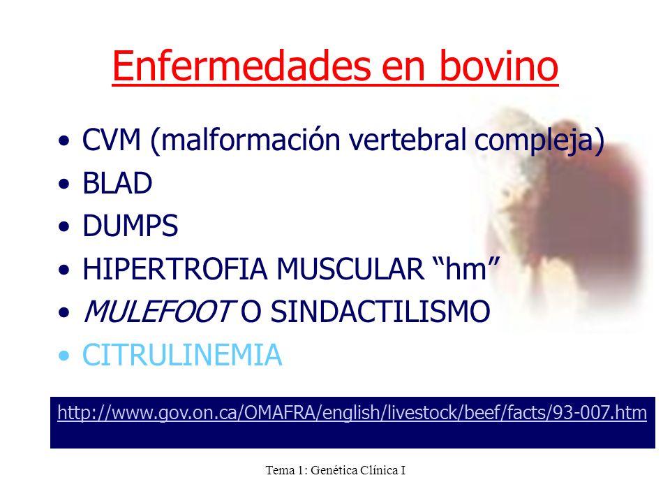 Tema 1: Genética Clínica I Enfermedades en bovino CVM (malformación vertebral compleja) BLAD DUMPS HIPERTROFIA MUSCULAR hm MULEFOOT O SINDACTILISMO CI