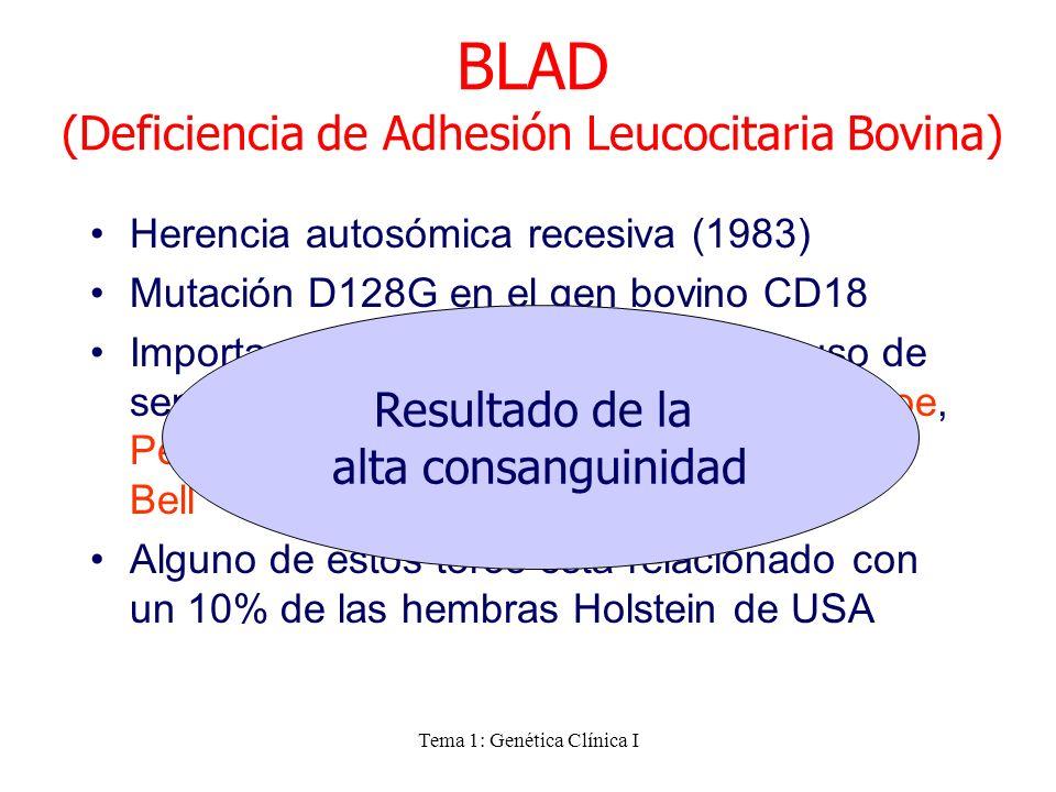 Tema 1: Genética Clínica I Herencia autosómica recesiva (1983) Mutación D128G en el gen bovino CD18 Importante en la raza Holstein por el uso de semen