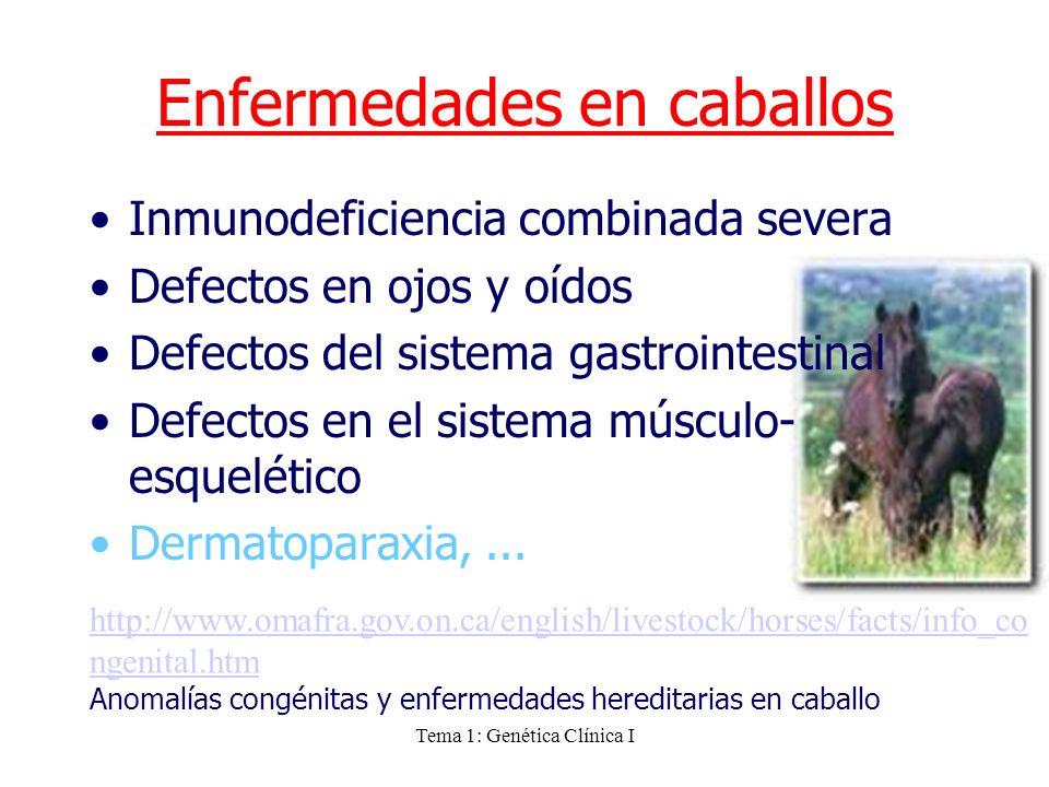 Tema 1: Genética Clínica I Enfermedades en caballos Inmunodeficiencia combinada severa Defectos en ojos y oídos Defectos del sistema gastrointestinal