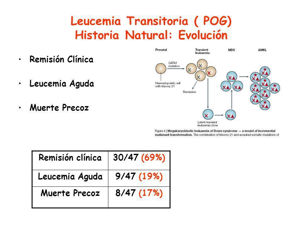 Leucemia Transitoria ( POG) Historia Natural: Evolución Remisión Clínica Leucemia Aguda Muerte Precoz Remisión clínica30/47 (69%) Leucemia Aguda9/47 (19%) Muerte Precoz8/47 (17%)