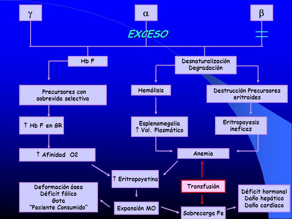Hb F Precursores con sobrevida selectiva Desnaturalización Degradación Hb F en GR Afinidad O2 Hemólisis Destrucción Precursores eritroides Esplenomega