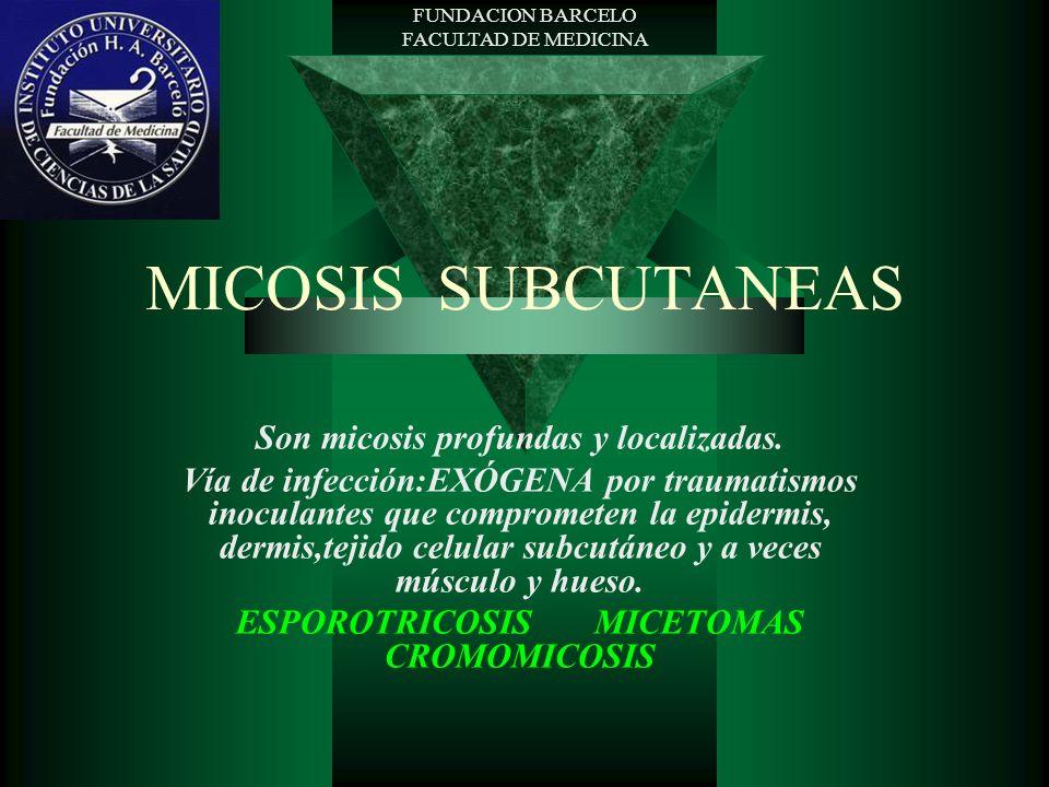 FUNDACION BARCELO FACULTAD DE MEDICINA MICOSIS SUBCUTANEAS Son micosis profundas y localizadas. Vía de infección:EXÓGENA por traumatismos inoculantes