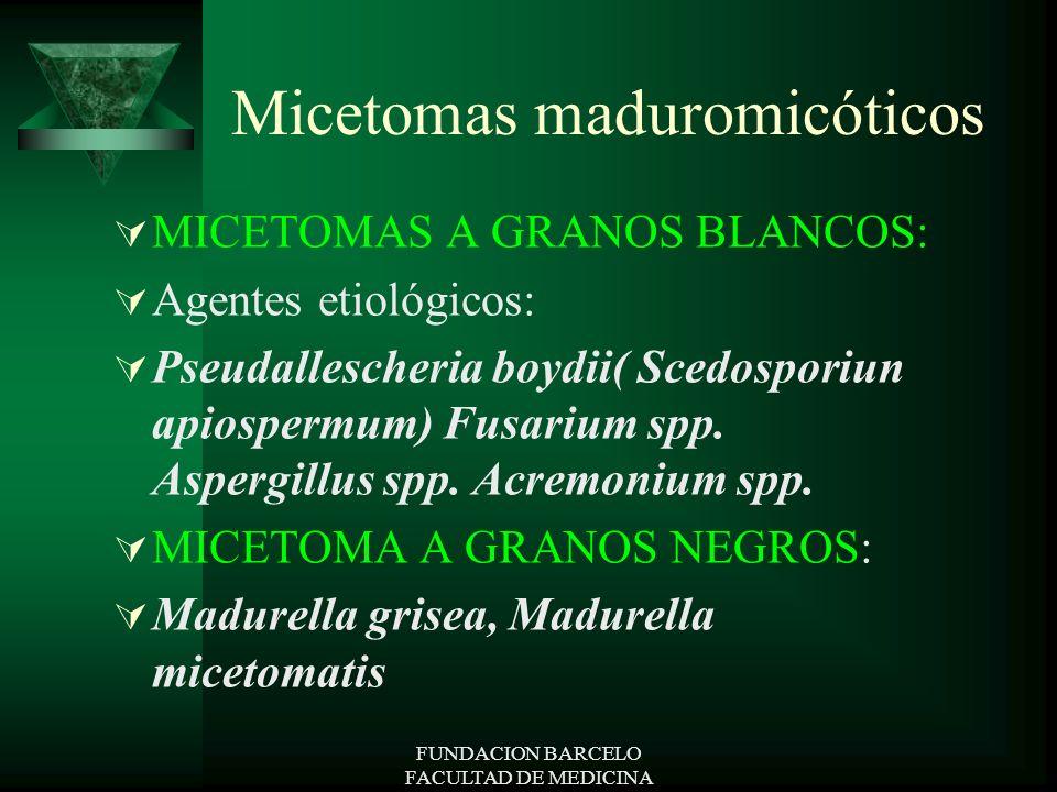 FUNDACION BARCELO FACULTAD DE MEDICINA Micetomas maduromicóticos MICETOMAS A GRANOS BLANCOS: Agentes etiológicos: Pseudallescheria boydii( Scedosporiu
