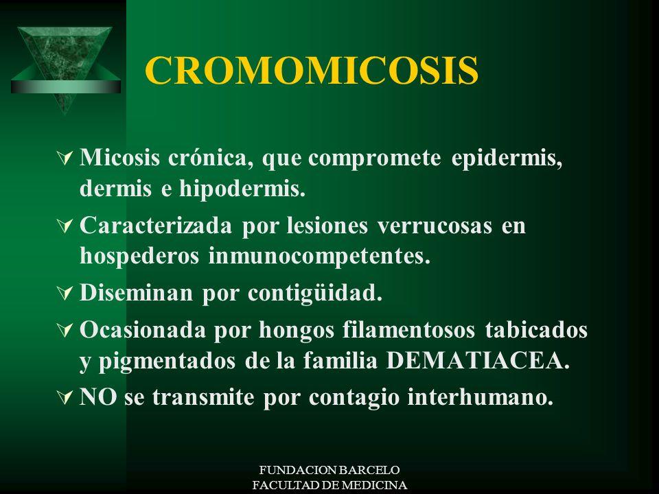 FUNDACION BARCELO FACULTAD DE MEDICINA CROMOMICOSIS Micosis crónica, que compromete epidermis, dermis e hipodermis. Caracterizada por lesiones verruco