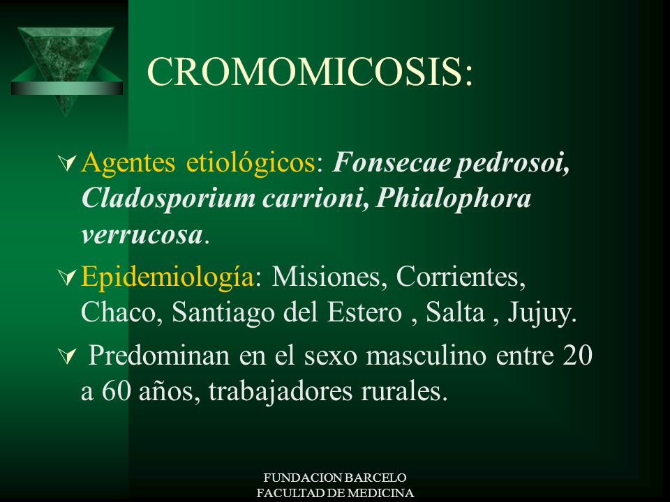 FUNDACION BARCELO FACULTAD DE MEDICINA CROMOMICOSIS: Agentes etiológicos: Fonsecae pedrosoi, Cladosporium carrioni, Phialophora verrucosa. Epidemiolog
