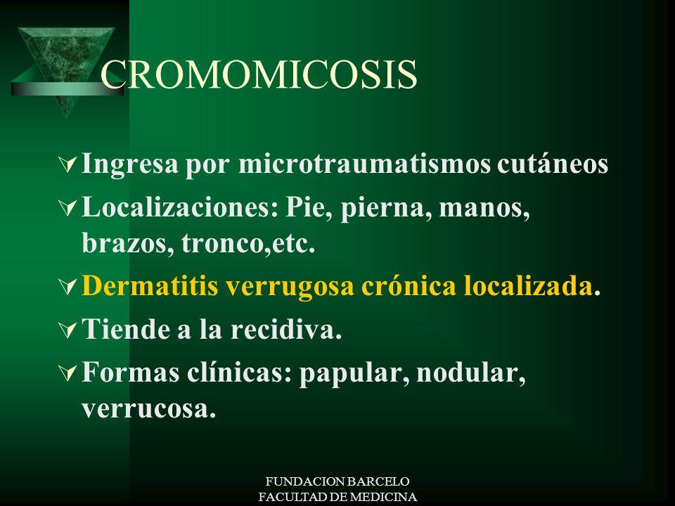FUNDACION BARCELO FACULTAD DE MEDICINA CROMOMICOSIS Ingresa por microtraumatismos cutáneos Localizaciones: Pie, pierna, manos, brazos, tronco,etc. Der