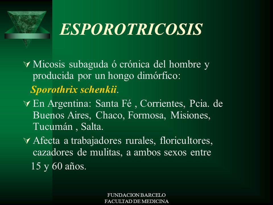 FUNDACION BARCELO FACULTAD DE MEDICINA ESPOROTRICOSIS Micosis subaguda ó crónica del hombre y producida por un hongo dimórfico: Sporothrix schenkii. E