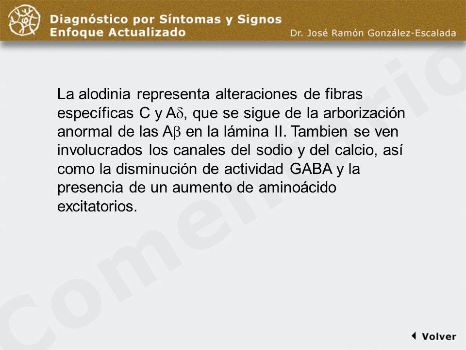 Comentario diapo12 La alodinia representa alteraciones de fibras específicas C y A, que se sigue de la arborización anormal de las A en la lámina II.