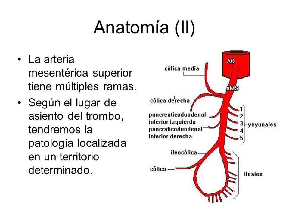 Informe ecográfico Largo segmento de asa intestinal de delgado, aperistáltica, edematosa y con engrosamiento transmural, que pudiera corresponder a enfermedad inflamatoria intestinal.