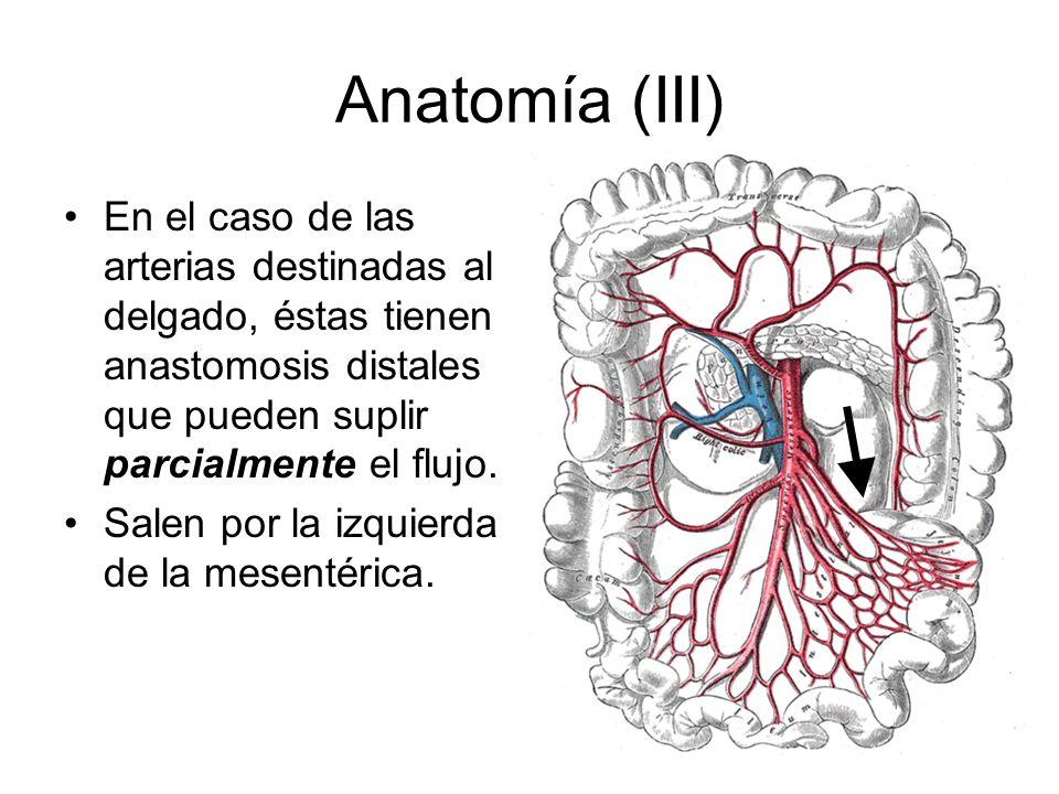 Anatomía (IV) El íleon terminal tiene una vascularización típica.