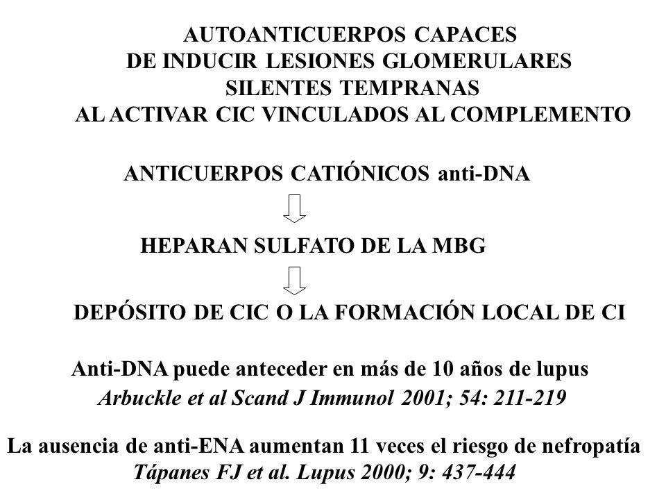 AUTOANTICUERPOS CAPACES DE INDUCIR LESIONES GLOMERULARES SILENTES TEMPRANAS AL ACTIVAR CIC VINCULADOS AL COMPLEMENTO ANTICUERPOS CATIÓNICOS anti-DNA HEPARAN SULFATO DE LA MBG DEPÓSITO DE CIC O LA FORMACIÓN LOCAL DE CI Anti-DNA puede anteceder en más de 10 años de lupus Arbuckle et al Scand J Immunol 2001; 54: 211-219 La ausencia de anti-ENA aumentan 11 veces el riesgo de nefropatía Tápanes FJ et al.