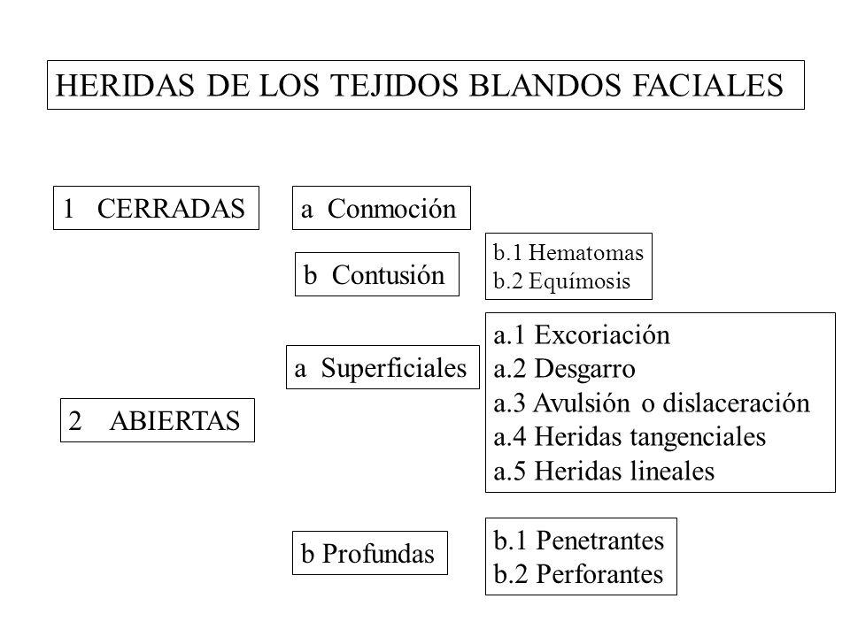 HERIDAS DE LOS TEJIDOS BLANDOS FACIALES 1 CERRADAS 2 ABIERTAS a Conmoción b Contusión b.1 Hematomas b.2 Equímosis a Superficiales b Profundas a.1 Excoriación a.2 Desgarro a.3 Avulsión o dislaceración a.4 Heridas tangenciales a.5 Heridas lineales b.1 Penetrantes b.2 Perforantes