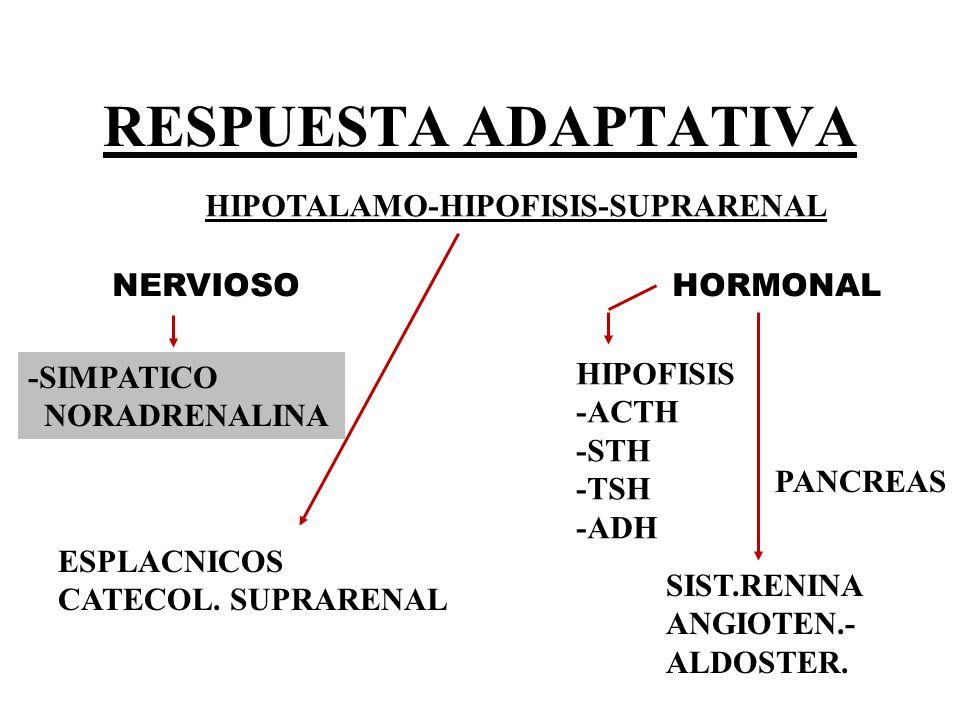 hipofisis suprarenal: