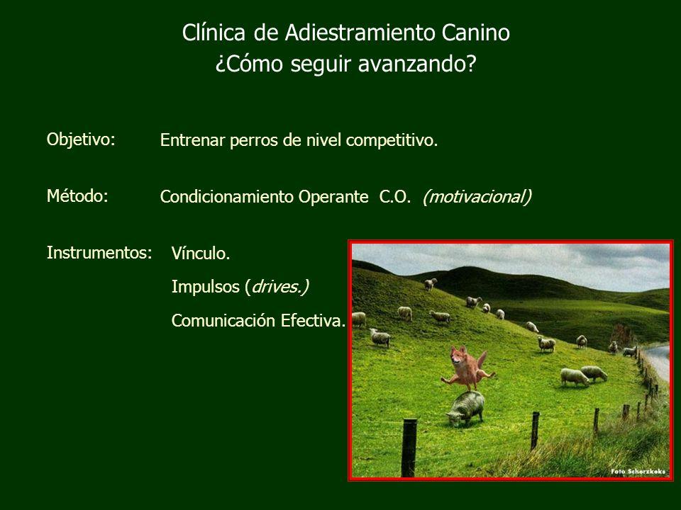 Clínica de Adiestramiento Canino ¿Cómo seguir avanzando.