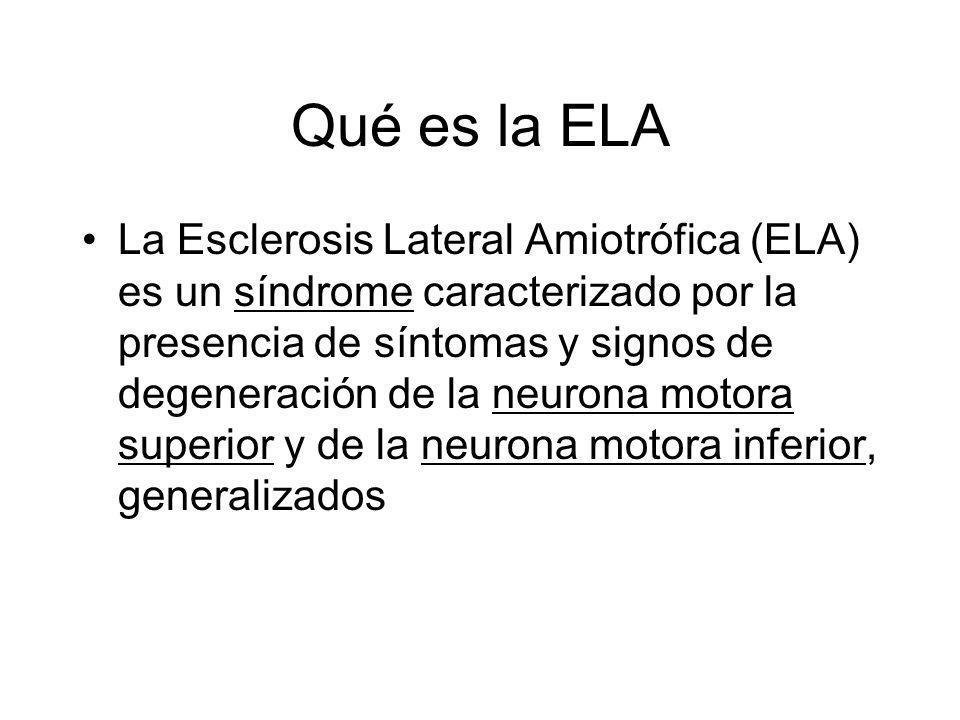 Qué es la ELA La Esclerosis Lateral Amiotrófica (ELA) es un síndrome caracterizado por la presencia de síntomas y signos de degeneración de la neurona motora superior y de la neurona motora inferior, generalizados
