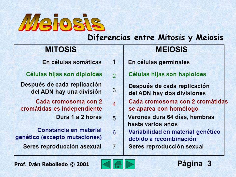 Página 4 La meiosis comprende 2 divisiones celulares : división I y división II.
