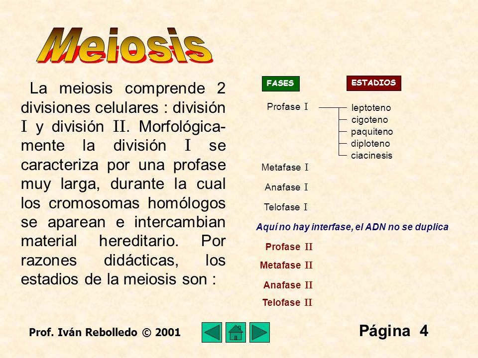 Página 25 Meiosis I 9292 9292 2323 4646 4646 46 cromosomas dobles, 92 cromátidas 92 moléculas de ADN Ovocito I Ovocito II Detenido en Profase I 2323 4646 4646 Primer cuerpo polar Detenido en Metafase II (Se completa durante la ovulación) Al llegar la pubertad, se inician los ciclos menstruales y con ello las ovulaciones.