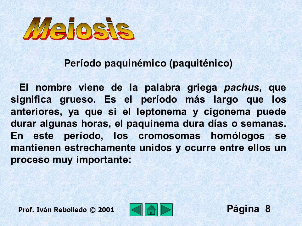 Página 19 Espermatogénesis Es el proceso de formación de los gametos masculinos llamados espermatozoides que ocurre en los tubos seminíferos de los testículos.