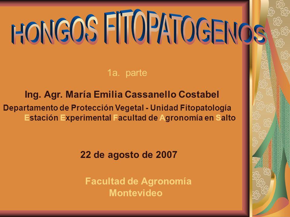 Estructuras de Deuteromycetes: (A) conidióforos libres, (B) sinema;(C) esporodoquio,(D) acérvulos y (E) picnidios Bergamin Filho,A.;Kimati,H.;Amorim,L.1995