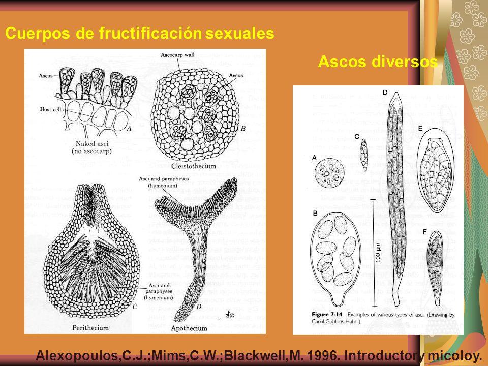 Cuerpos de fructificación sexuales Ascos diversos Alexopoulos,C.J.;Mims,C.W.;Blackwell,M. 1996. Introductory micoloy.