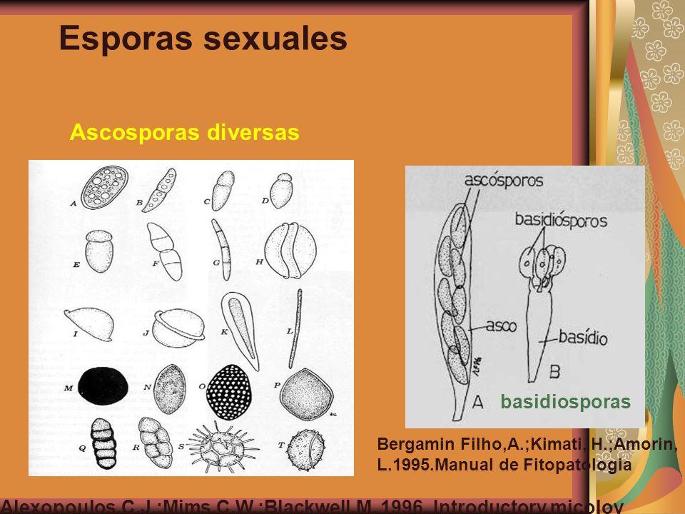Esporas sexuales Ascosporas diversas basidiosporas Alexopoulos,C.J.;Mims,C.W.;Blackwell,M. 1996. Introductory micoloy Bergamin Filho,A.;Kimati, H.;Amo