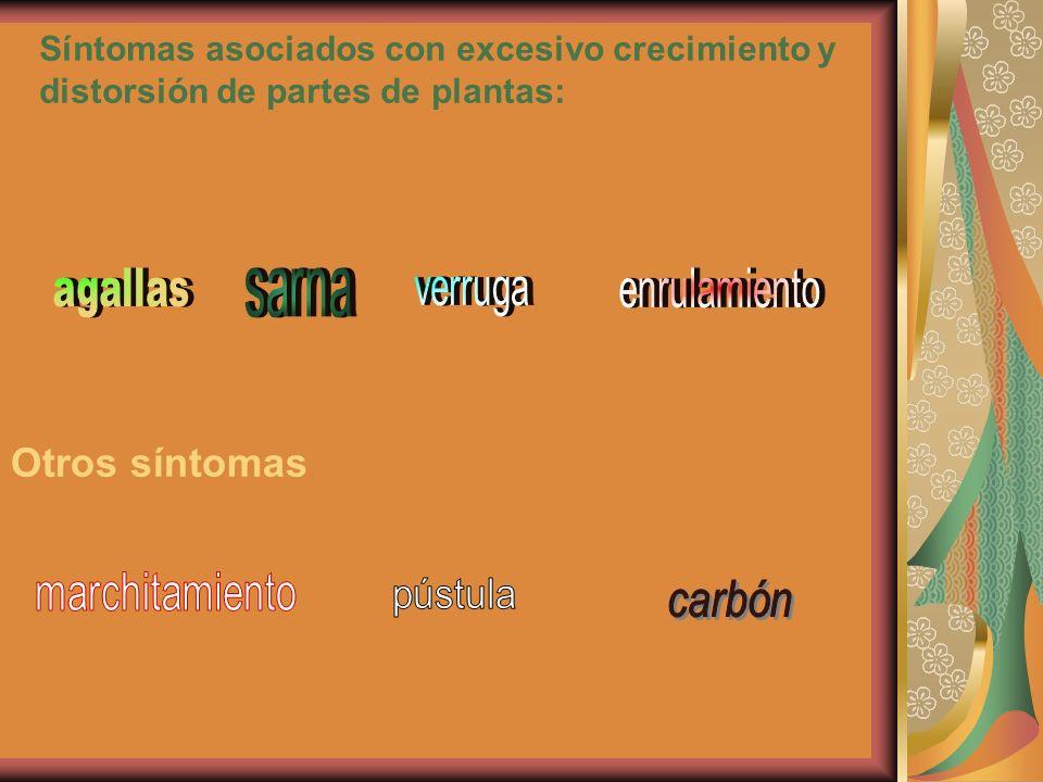 Síntomas asociados con excesivo crecimiento y distorsión de partes de plantas: Otros síntomas