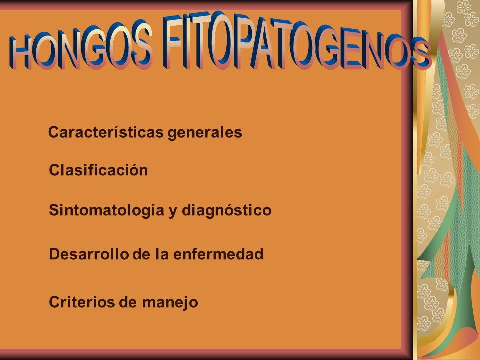 Sinema, esporodoquio, acérvulos y picnidios sinema esporodoquio acérvulo picnidio Bergamin Filho,A.;Kimati, H.;Amorin,L.
