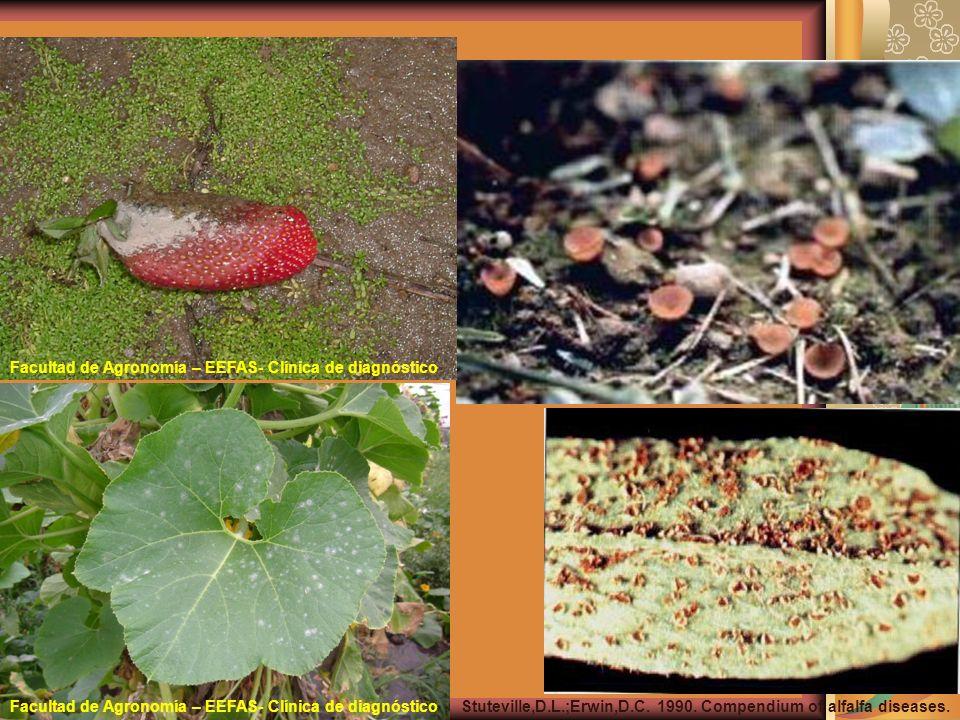 Stuteville,D.L.;Erwin,D.C. 1990. Compendium of alfalfa diseases. Facultad de Agronomía – EEFAS- Clínica de diagnóstico