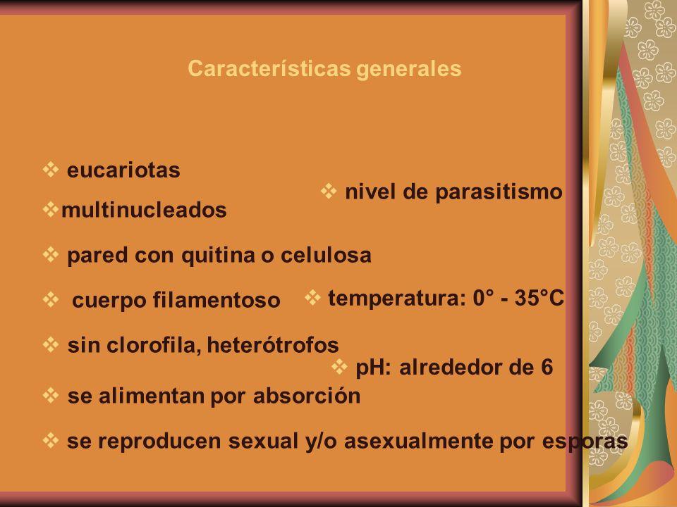 Características generales eucariotas multinucleados sin clorofila, heterótrofos se alimentan por absorción se reproducen sexual y/o asexualmente por e