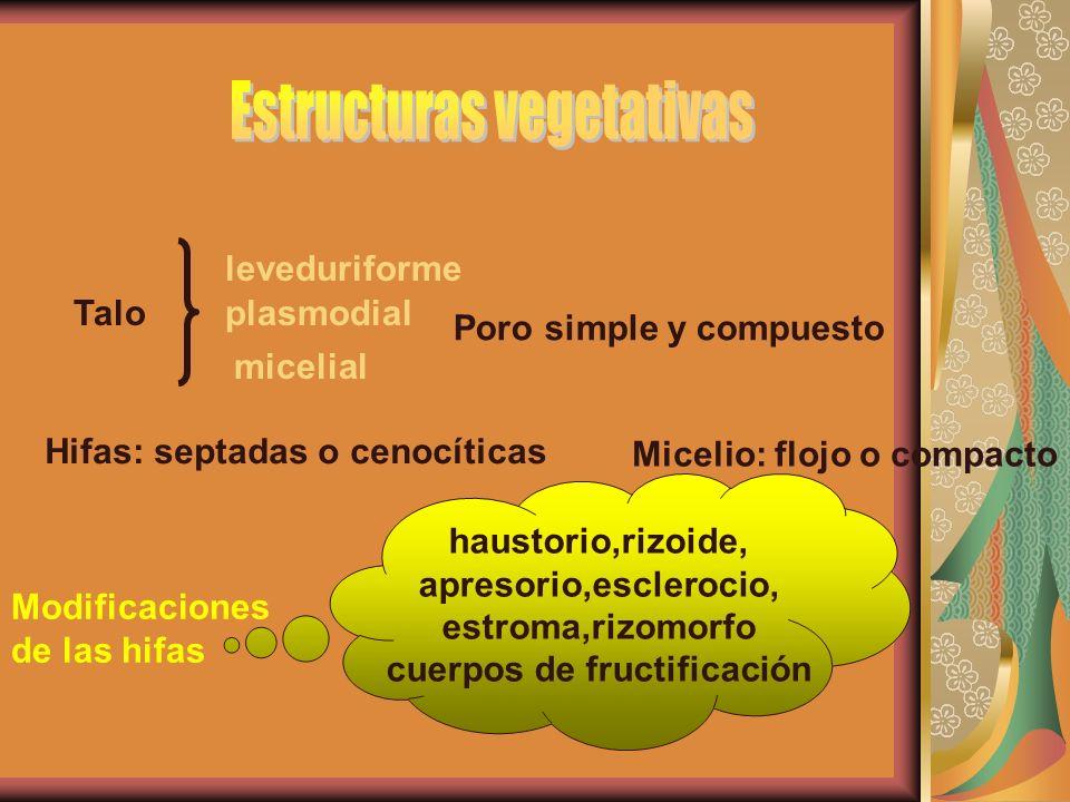 Erysiphe graminis (A-C), C, Oidium, D, Ovularopsis.