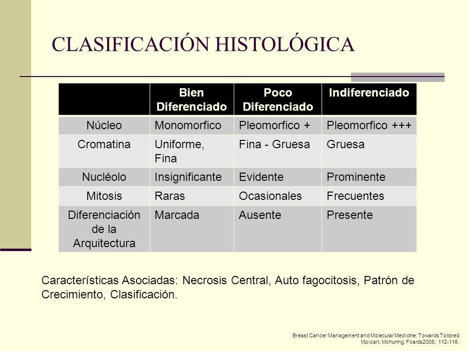 CLASIFICACIÓN HISTOLÓGICA Bien Diferenciado Poco Diferenciado Indiferenciado NúcleoMonomorficoPleomorfico +Pleomorfico +++ CromatinaUniforme, Fina Fin