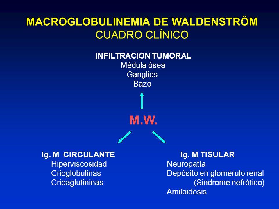 MACROGLOBULINEMIA DE WALDENSTRÖM CUADRO CLÍNICO INFILTRACION TUMORAL Médula ósea Ganglios Bazo M.W. Ig. M CIRCULANTE Hiperviscosidad Crioglobulinas Cr