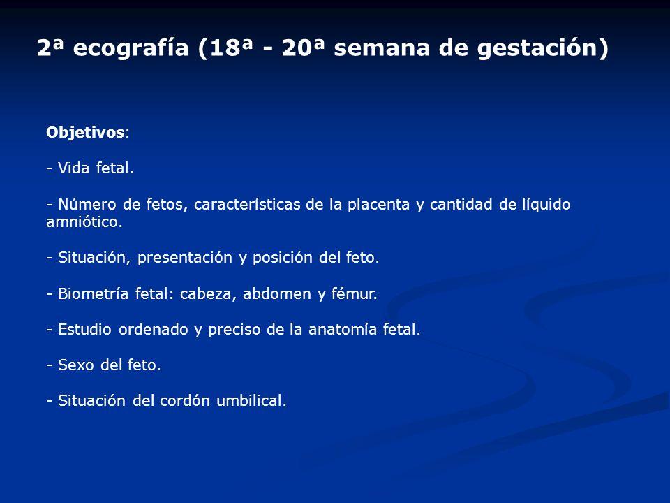 2ª ecografía (18ª - 20ª semana de gestación) Objetivos: - Vida fetal. - Número de fetos, características de la placenta y cantidad de líquido amniótic