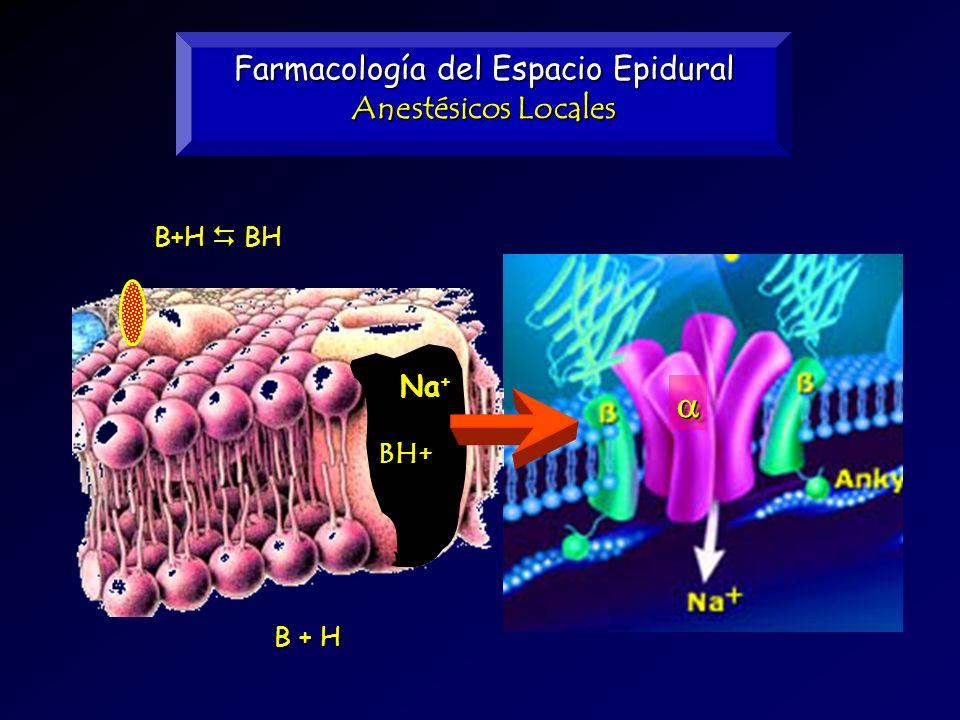 Farmacología del Espacio Epidural Anestésicos Locales B+H BH B + H BH+ Na +