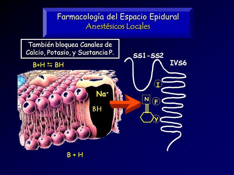 Farmacología del Espacio Epidural Anestésicos Locales B+H BH B + H I F Y N SS1-SS2 IVS6 BH Na + También bloquea Canales de Calcio, Potasio, y Sustanci