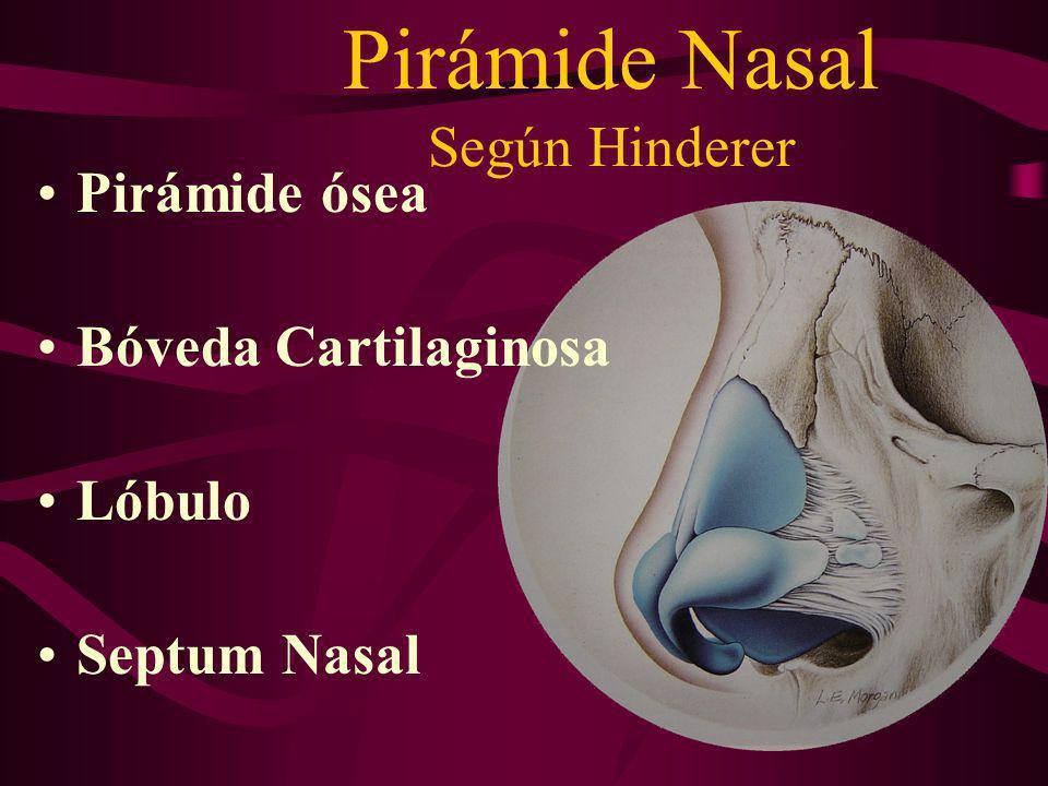 Pirámide Nasal Según Hinderer Pirámide ósea Bóveda Cartilaginosa Lóbulo Septum Nasal