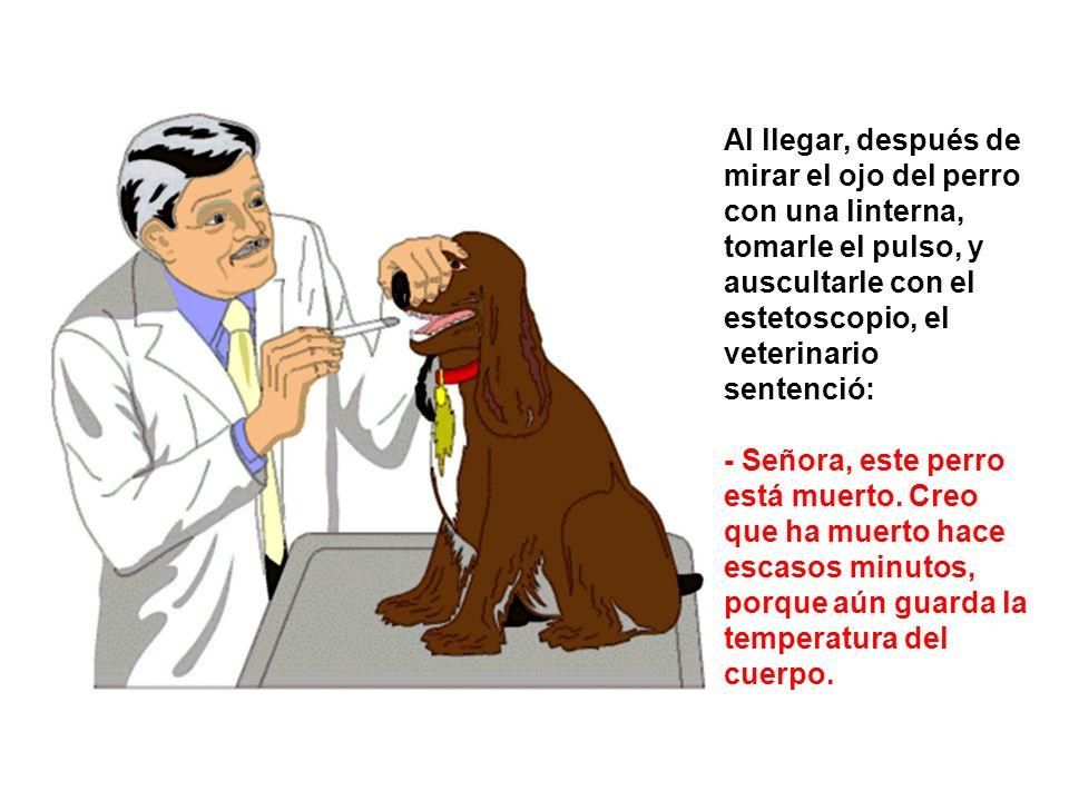 Al llegar, después de mirar el ojo del perro con una linterna, tomarle el pulso, y auscultarle con el estetoscopio, el veterinario sentenció: - Señora, este perro está muerto.