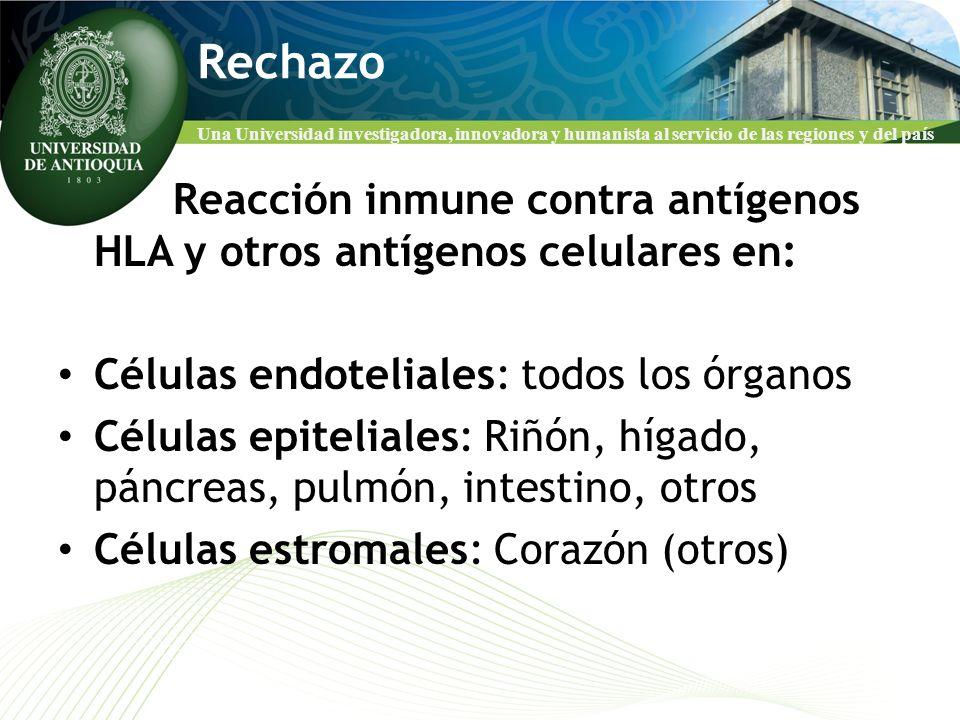 Una Universidad investigadora, innovadora y humanista al servicio de las regiones y del país Rechazo Reacción inmune contra antígenos HLA y otros antí