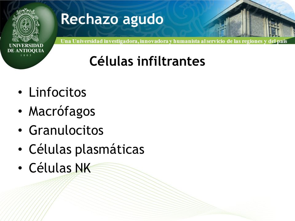 Rechazo agudo Células infiltrantes Linfocitos Macrófagos Granulocitos Células plasmáticas Células NK