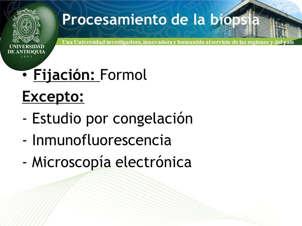 Una Universidad investigadora, innovadora y humanista al servicio de las regiones y del país Procesamiento de la biopsia Fijación: Formol Excepto: - E