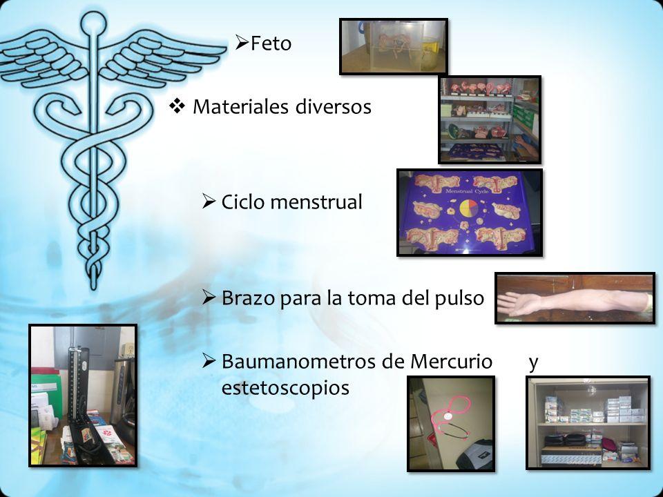 Feto Materiales diversos Ciclo menstrual Brazo para la toma del pulso Baumanometros de Mercurio y estetoscopios
