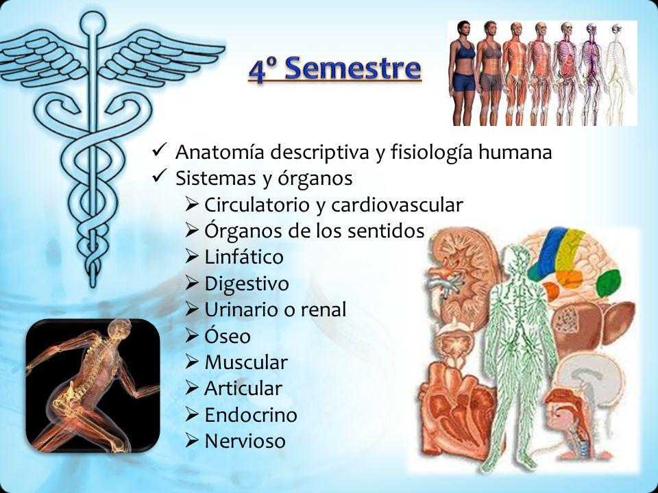 Anatomía descriptiva y fisiología humana Sistemas y órganos Circulatorio y cardiovascular Órganos de los sentidos Linfático Digestivo Urinario o renal