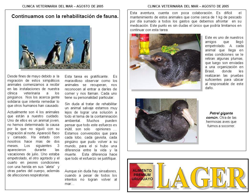 Continuamos con la rehabilitación de fauna. Desde fines de mayo debido a la migración de estos simpáticos animales comenzamos a recibir en las instala