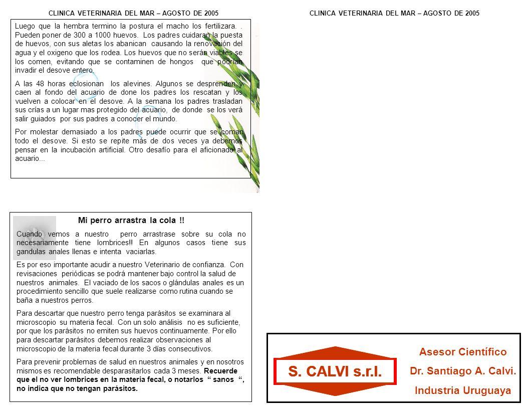 S. CALVI s.r.l. Luego que la hembra termino la postura el macho los fertilizara..