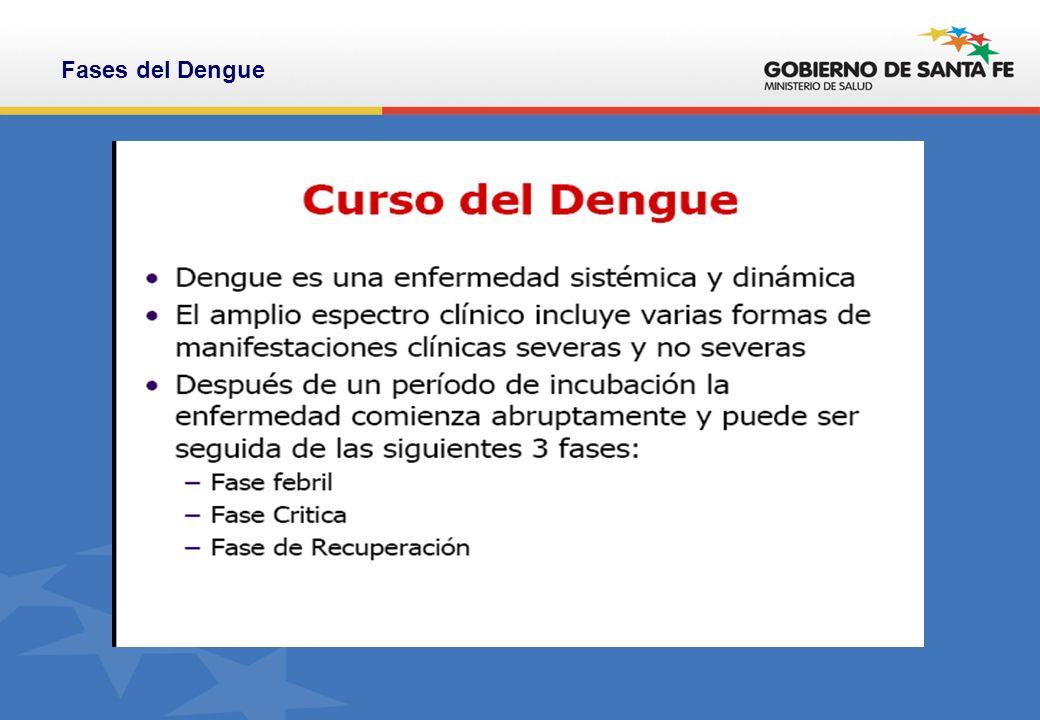 Fases del Dengue