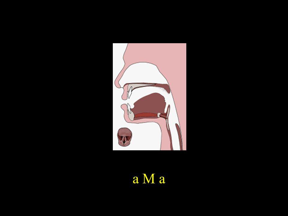 a M a