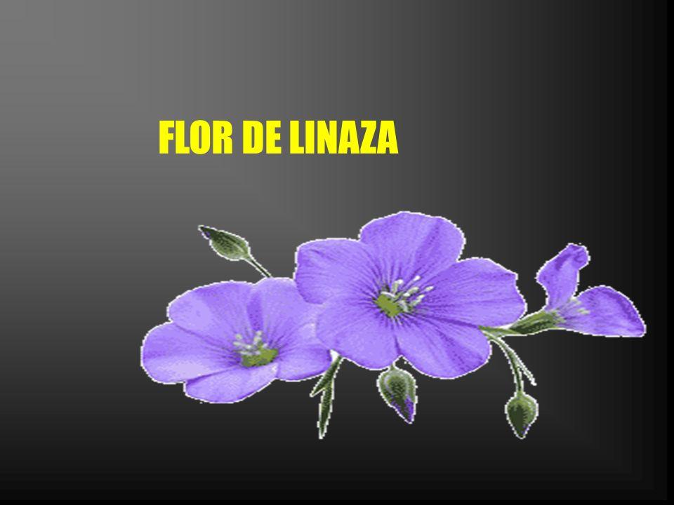 RETENCIÓN DE LIQUIDOS: El consumo regular de linaza, ayuda a los riñones a excretar agua y sodio.