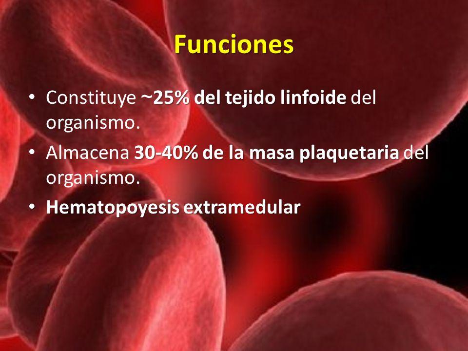 Funciones 25% del tejido linfoide Constituye ~ 25% del tejido linfoide del organismo. 30-40% de la masa plaquetaria Almacena 30-40% de la masa plaquet